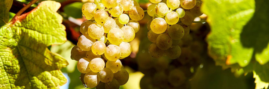 amalurra-wine-tour