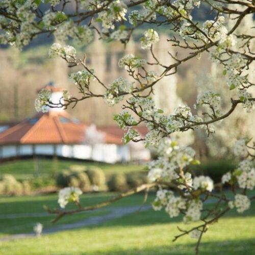 Amalurra-Retreat-Basque-Country-5
